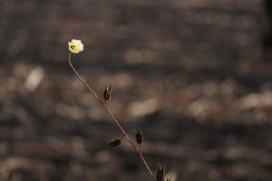 The alone flower