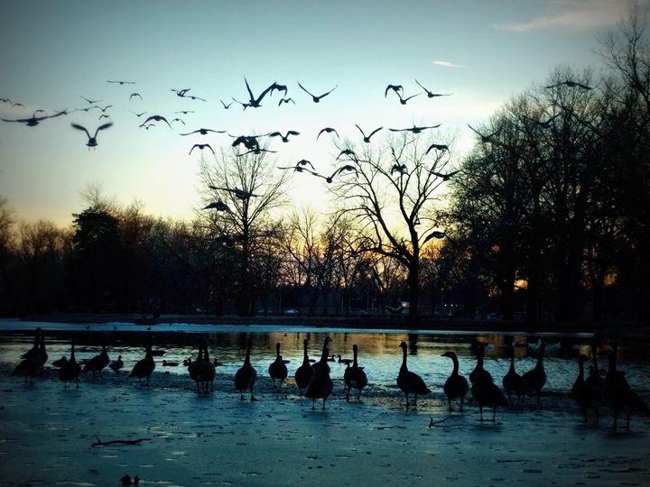 Flock - A Flash of Blake
