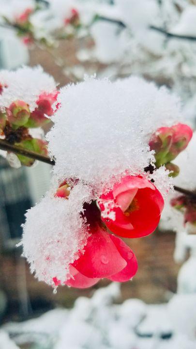 Kisses of snow - Art of Gratitude