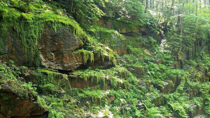 Flume Gorge - ELF Natural Beauty