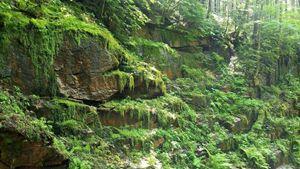 Flume Gorge