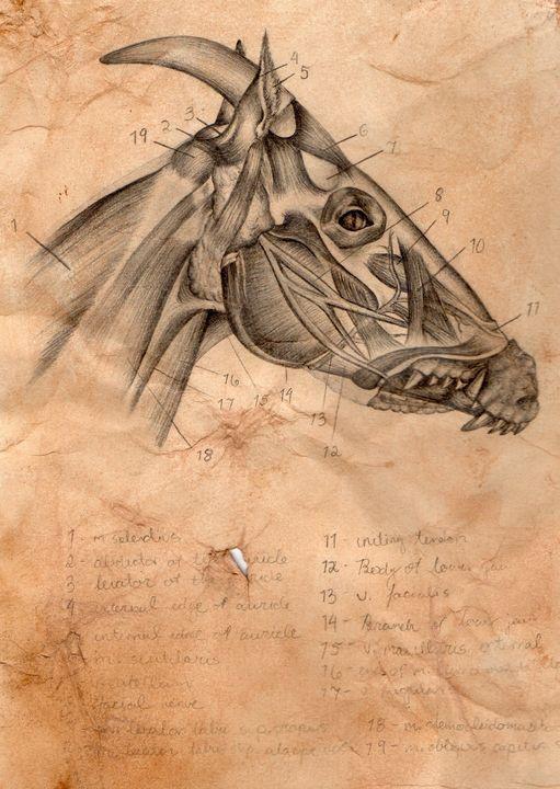 Equus Crocodylinae (Scottish Kelpie) - Audrey Lea Art