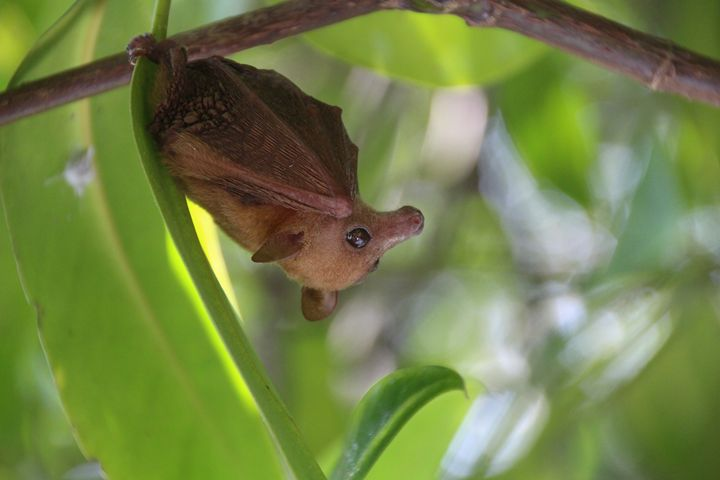Baby Flying Fox - Mark S Fine Art