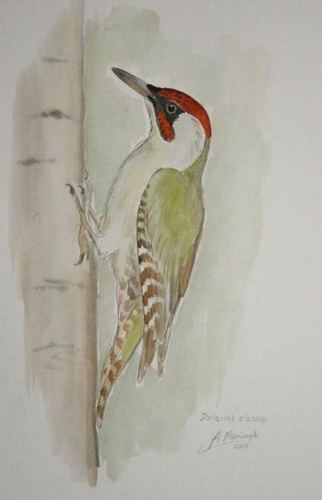 woodpecker - The Gallery Design