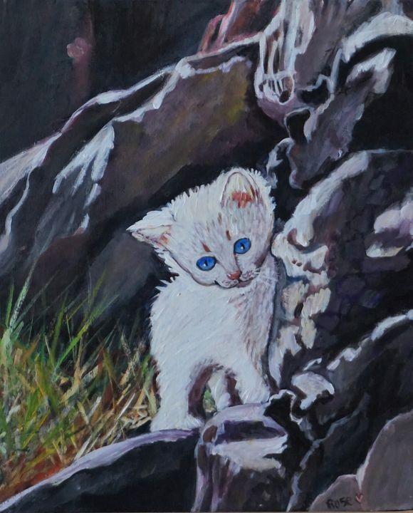 Exploring Kitten - Rose Ananda Heart
