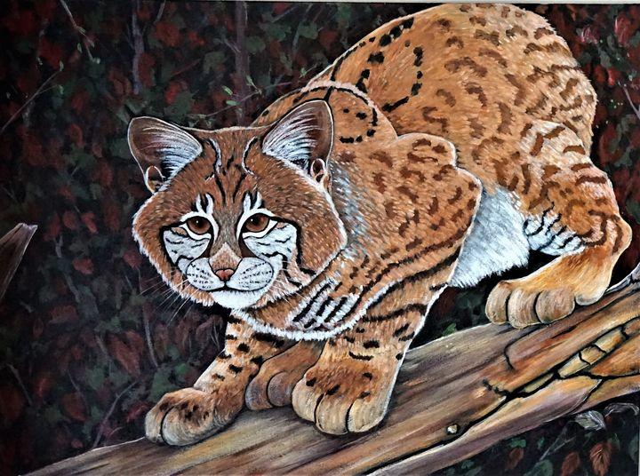 Bobcat's Stealth - Rose Ananda Heart