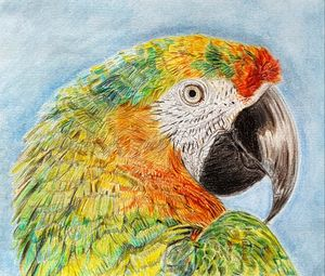 Multi-coloured Macaw