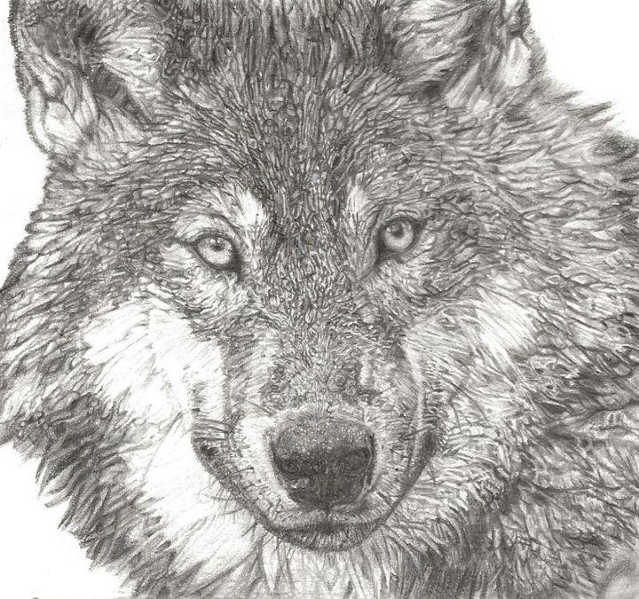 Wolf pencil drawing - Lottie may's art - Drawings ...
