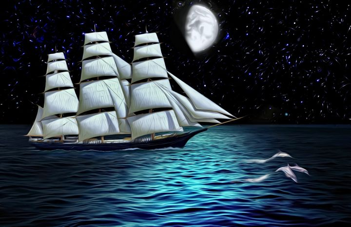 Night trip on a sailboat with dolphi - Souvenir
