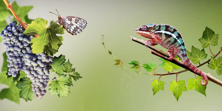 Butterfly and chameleon. - Souvenir