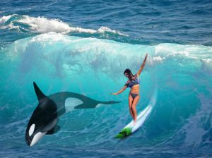 Surfer on sea with a killer whale