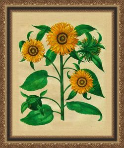 Sunflowers in frame - Souvenir