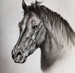 Sketch horse