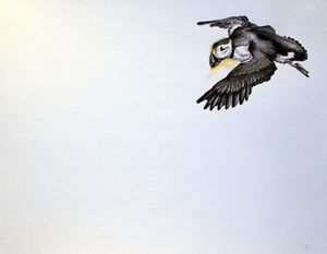 Puffin - Tiffany Asher - Art and Gallery