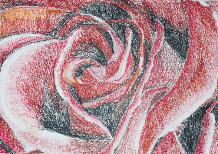 Closeup of Rose - Tazio Yandell