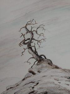 High Alpine Bristle Cone Pine