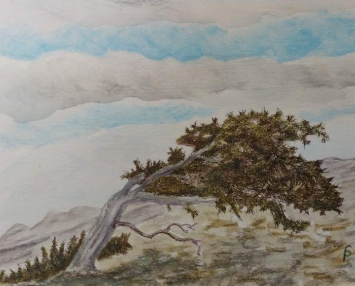 Bristle Cone pine in the Alpine - Fallen Branch Designs