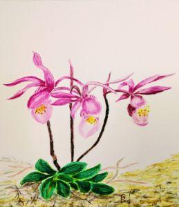 Fairy Slipper Mountain Orchid - Fallen Branch Designs