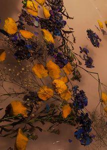 Flowers Floating