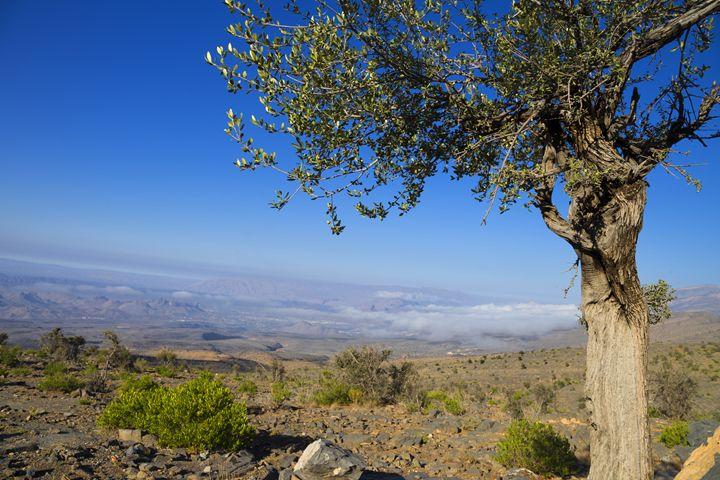 Frame - Oman Aladawi