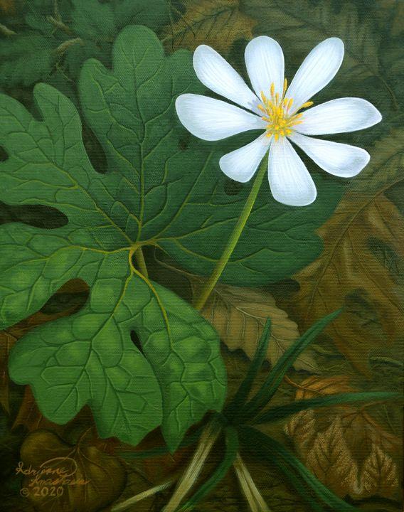 Early Bloomer Bloodroot - Adrienne Anastasia