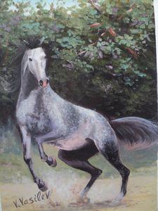 Arabian breed