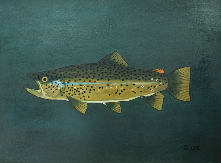Brown Trout - Donald R Lee