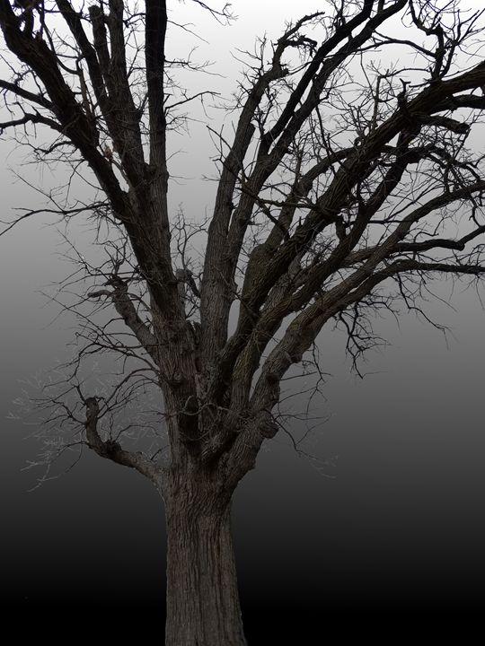 Reichart Tree_20180411_142304 - Jenna's Treasures