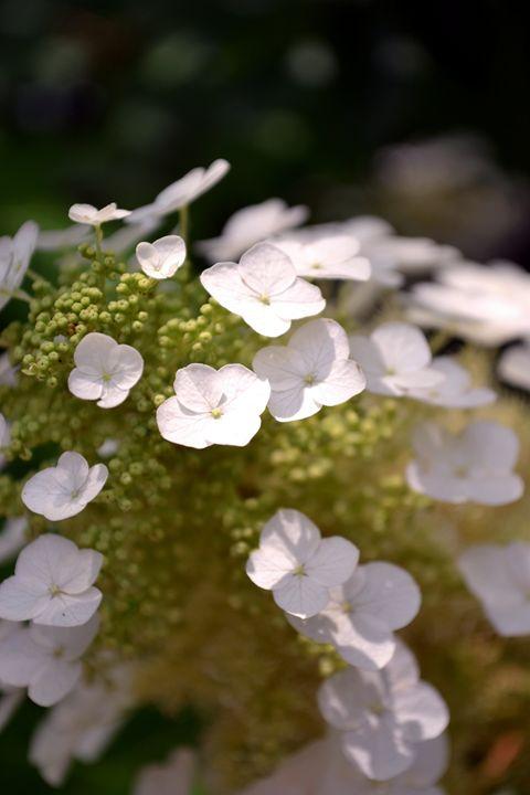 Fluffy Flowers - TiffaZilla