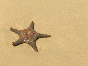 Starfish Landed