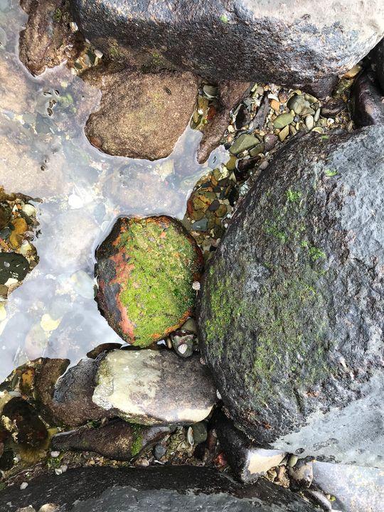 Burleigh Rock Pools - Julia's Watermarks