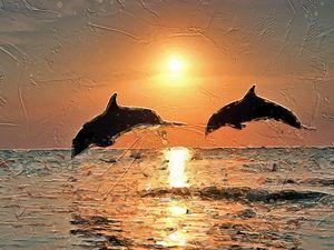Roatan Dolphins