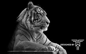 Black & White Tiger - TorreWhite's Gallery
