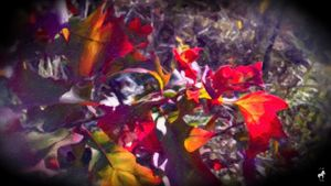 Jo's Fall Leaves