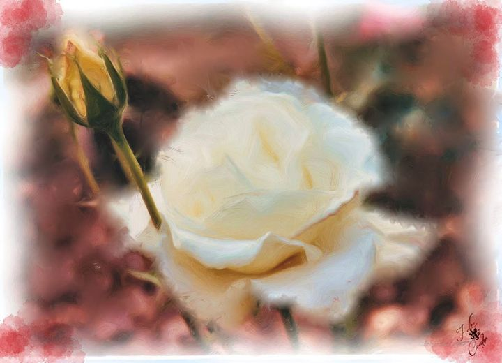 White Rose - Mystique Gallery