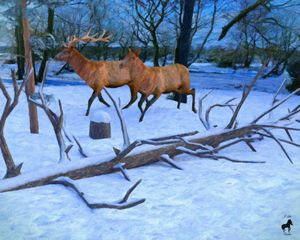 Elk In Winter - Mystique Gallery