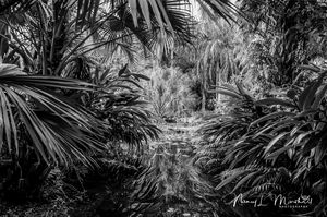 Florida Pond Black n White Signed