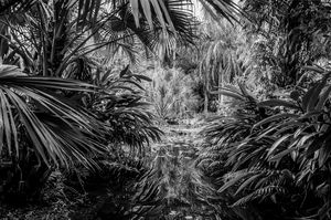 Florida Pond Black n White