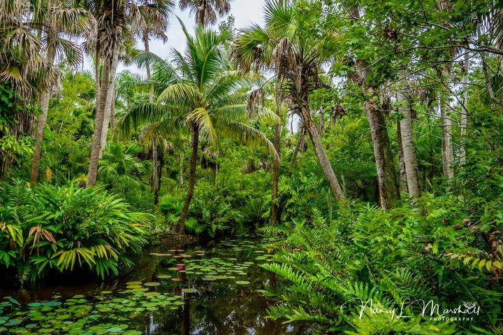 Florida Pond 1 Signed - ccgrin