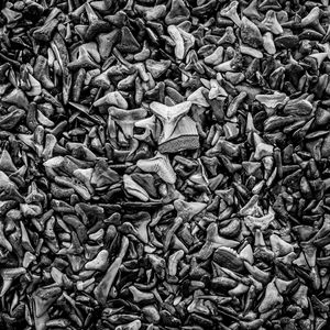 Sharks Teeth 7 Black n White