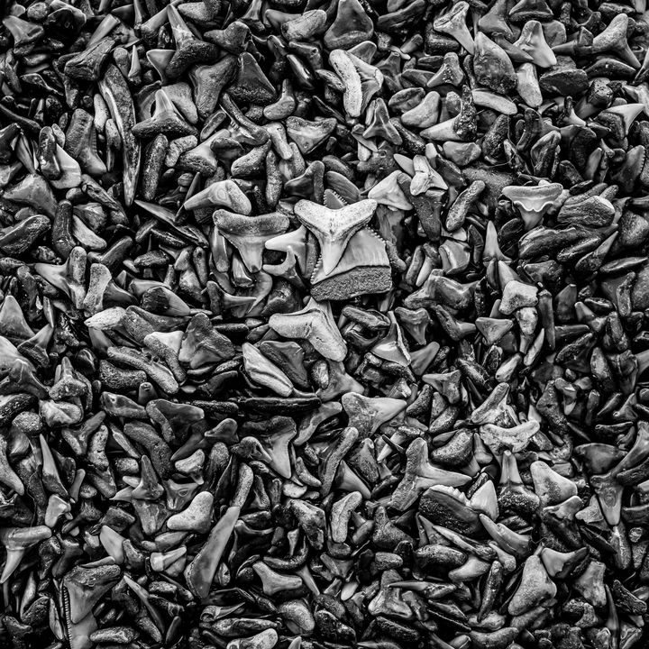 Sharks Teeth 7 Black n White - ccgrin