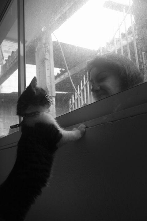 Kitten looking through window - Eréndira Hernández