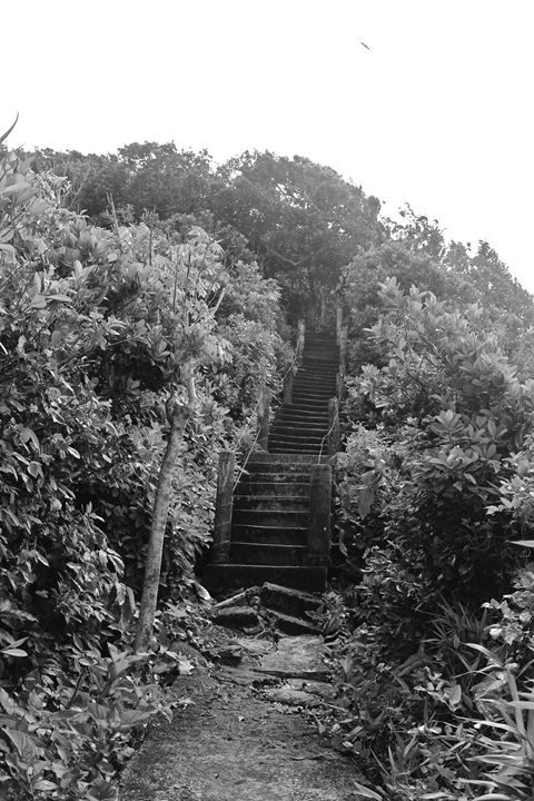 Stairs to the jungle - Eréndira Hernández