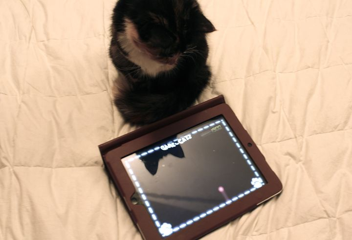 Cat and Ipad - Eréndira Hernández