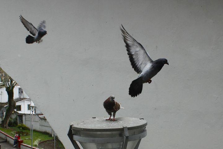 Pigeons - Eréndira Hernández