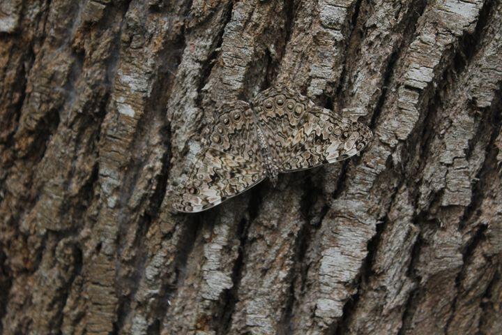 Butterfly Camouflage - Eréndira Hernández
