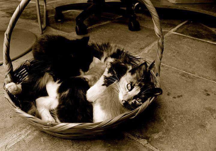 Mother cat with kittens in basket - Eréndira Hernández