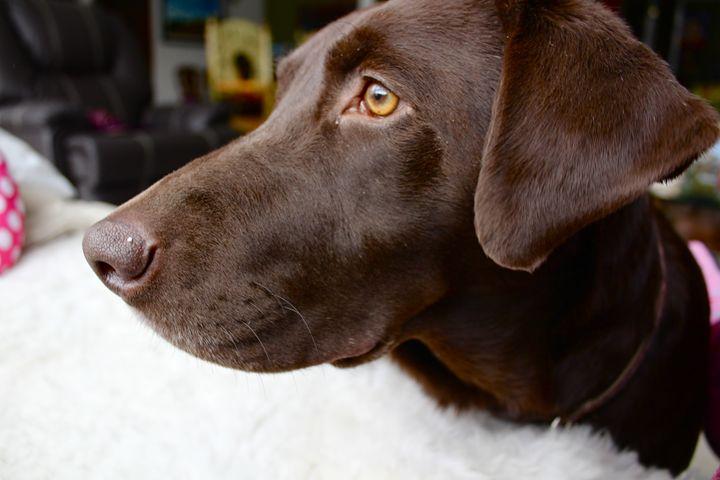 Labrador - Eréndira Hernández