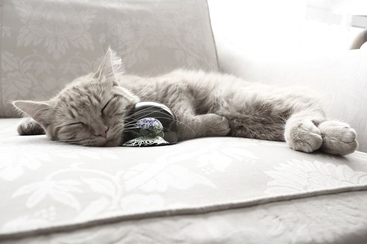 Cat napping with sphere - Eréndira Hernández