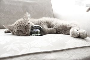 Cat napping with sphere